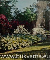 V domačem vrtu